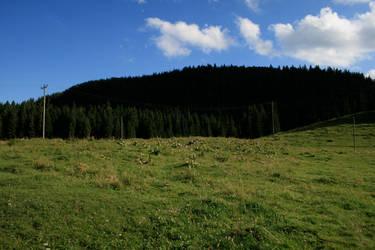 alpine meadow 11.