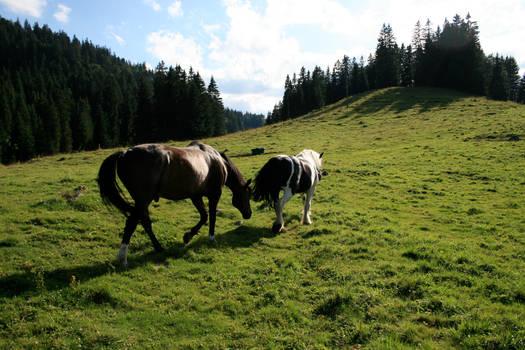 horses in alpine meadow 01.