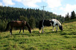 horses in alpine meadow 02. by greenleaf-stock