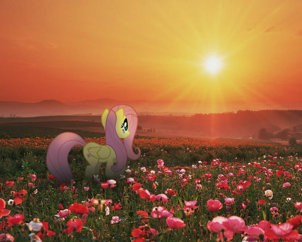 Fluttershy Field by Mixermike622