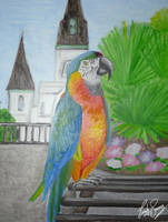 French Quarter Parrot by TellerofTales