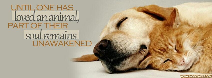 Love an animal by CreativeMark24