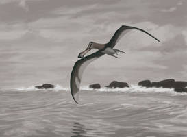 Anhanguera piscator by Paleoartists