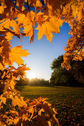 autumn leaves by Phil8