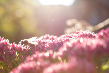 working*bee