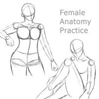 Female Anatomy Practice 1 by RuuRuu-Chan