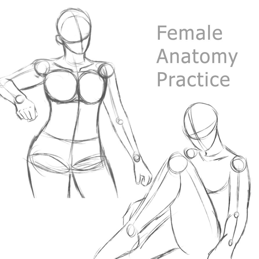 Female Anatomy Practice 1 By Ruuruu Chan On Deviantart
