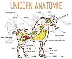 The Unicorn's Anatomy. by mutleyjames