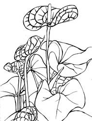 Flowers Lineart by Amashirotsuki