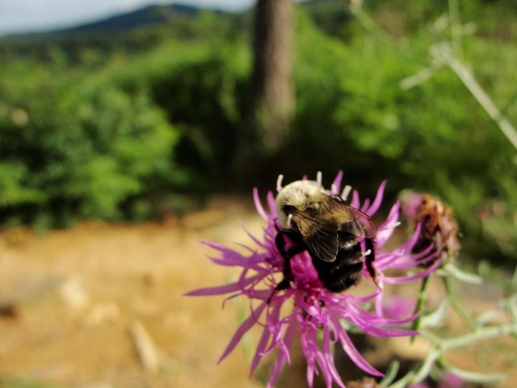 Sweet Bee by Amafel-Elf