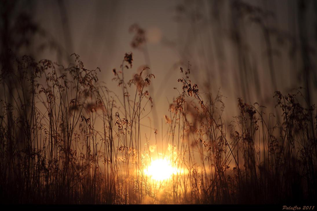 Winter Sun by PalaCRO
