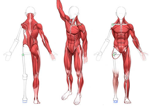 ULTIMATE Anatomy