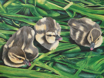 Duck Stamp by bcbdrums