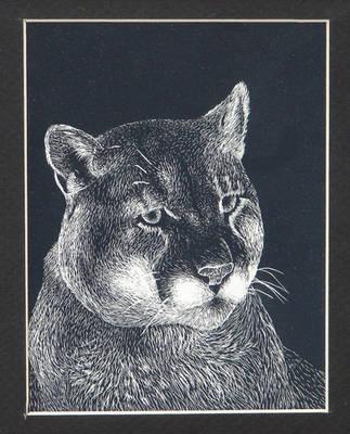 Puma by bcbdrums