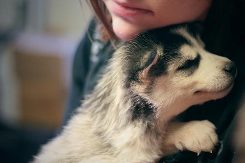 Dog's trust. by yaprakduru