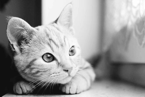 Cat is watchin' by yaprakduru