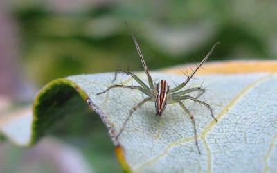 Spider Vein by St3gs04