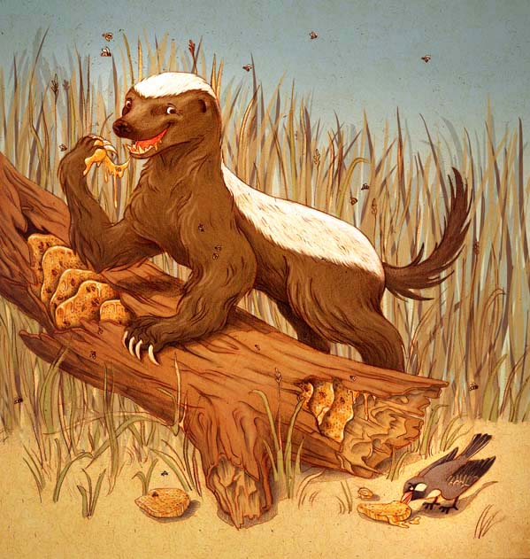 Honey Guide Bird And Badger Symbiotic Relationship