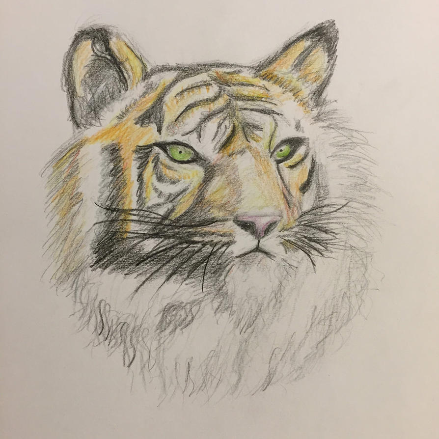 Tiger Sketch by Poke-Dave