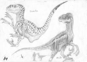 Raptor study-sornaensis by ebelesaurus