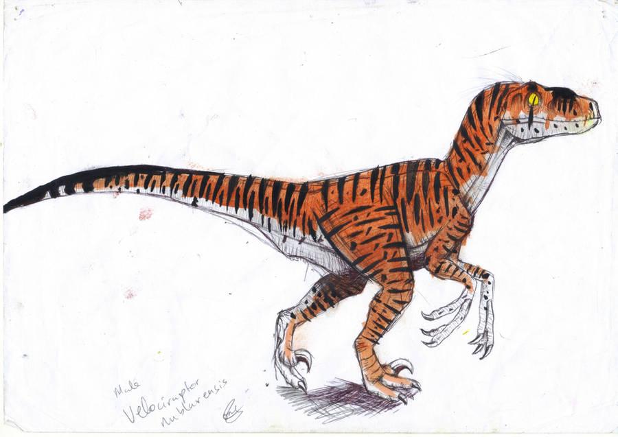 Male Velociraptor Nublarensis. by ebelesaurus