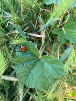 Lady Bug of May