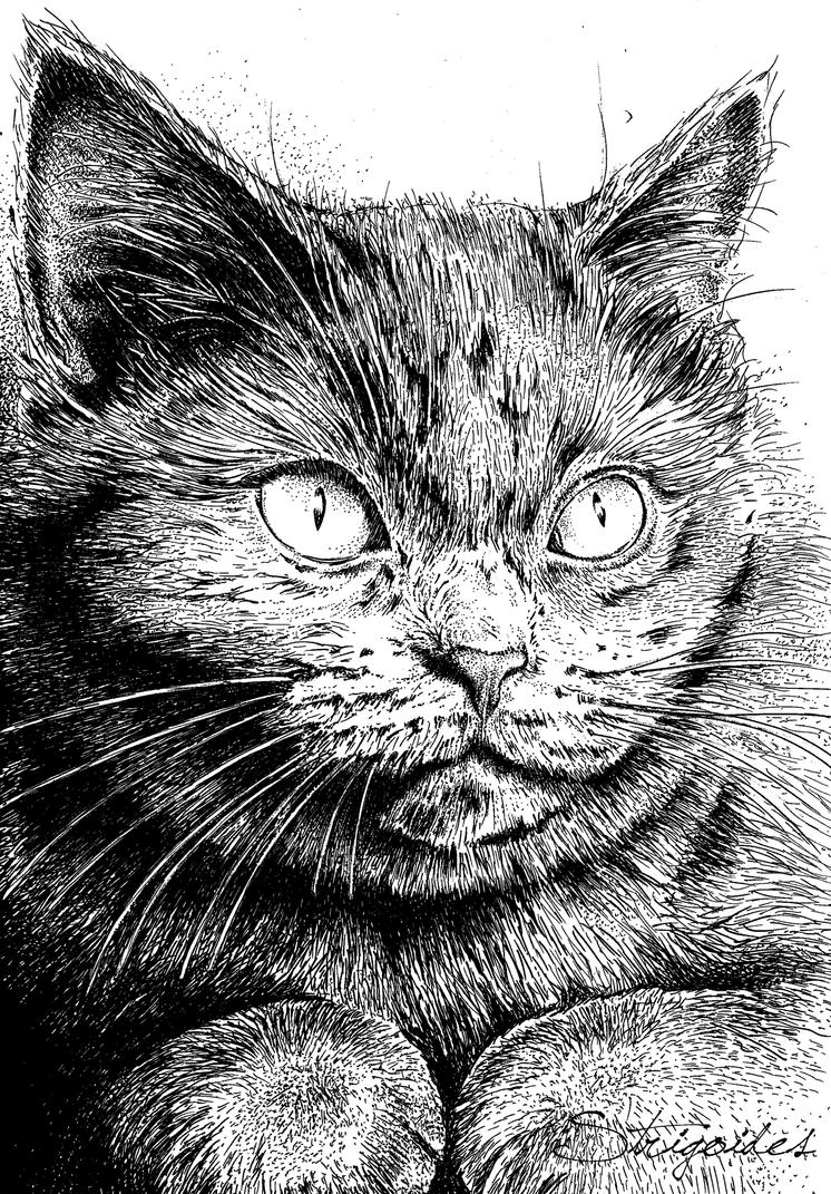 Howard - Ink drawing by strigoides