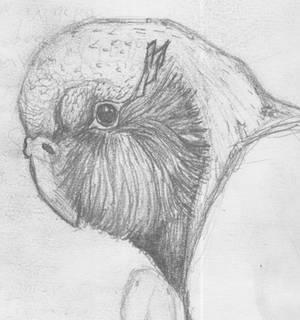 Kakapo bird