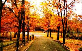 Alburn Forest Road by DarkFallenAngel101