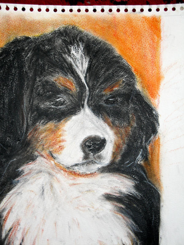 bernese cattle dog by Nanook94