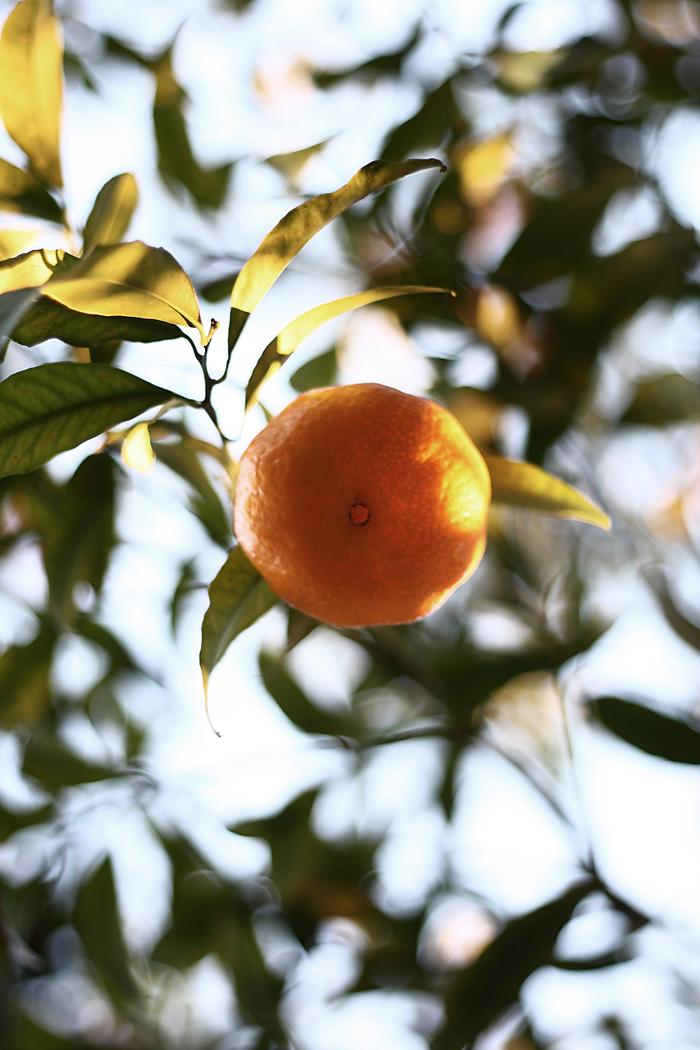 Orange Sun... by MoonEssence