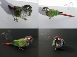 ''Laser-eyed'' green-cheeked conure by Riesz-Aurea
