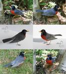 [Needle felted] American robin