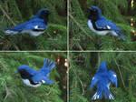 [Needle felted] Black-throated blue warbler by Riesz-Aurea