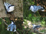 [Needle felted] White-breasted nuthatch