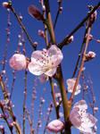.stock: blossom 2.