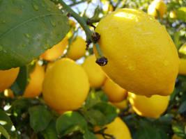.:stock - lemon 3:.