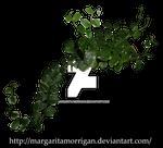 Ficus Ivy