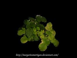 Rose By Margaritamorrigan by margarita-morrigan
