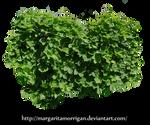 plant bindweed by Margaritamorrigan