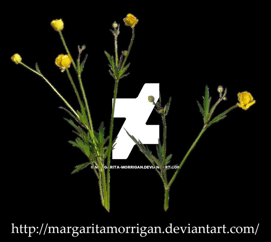 wildflowers by Margaritamorrigan