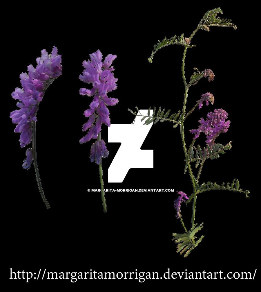 flowers by Margaritamorrigan