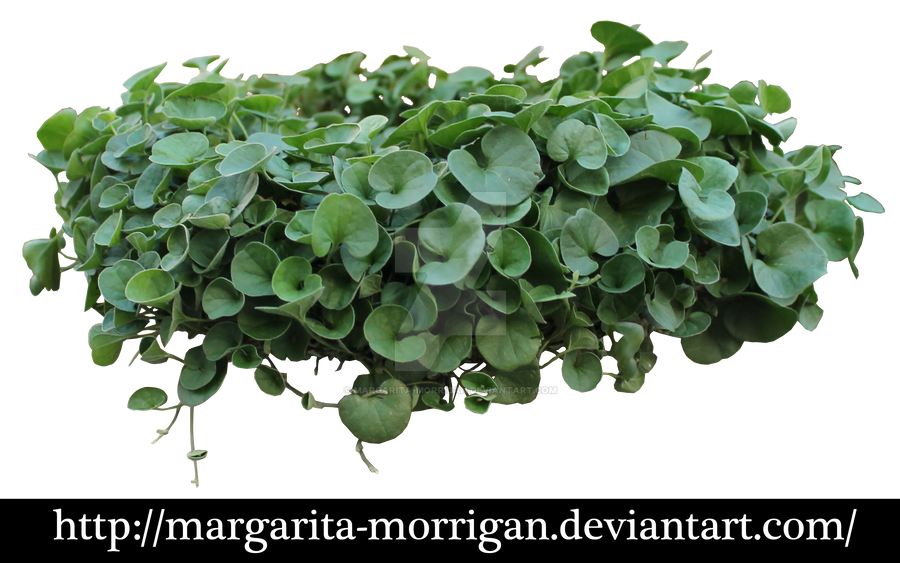 plant by margarita-morrigan