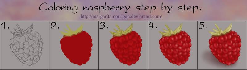 Coloring raspberry step by step by margarita-morrigan