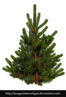 pine-tree by margarita-morrigan