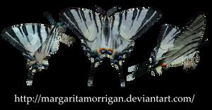 butterflies by margarita-morrigan