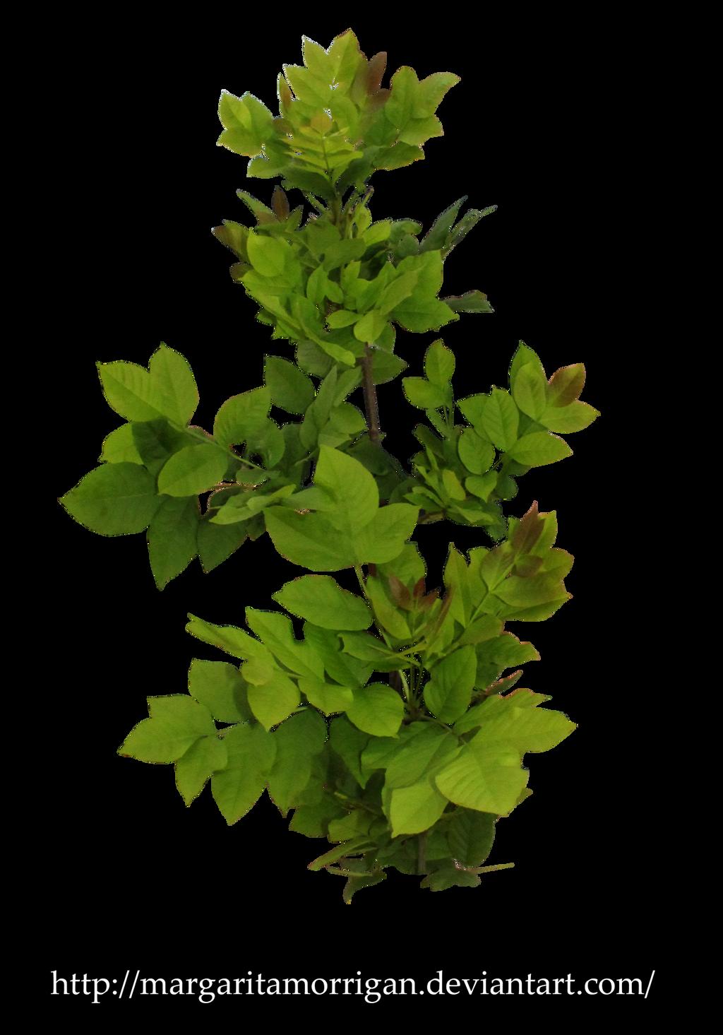 shrub by margarita-morrigan