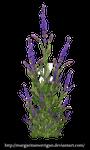 purple bush