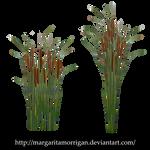 Typha by margarita-morrigan