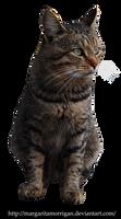 Cat2 by margarita-morrigan